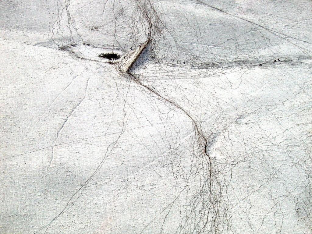 desire_paths